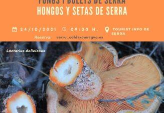 Hongos y Setas de Serra