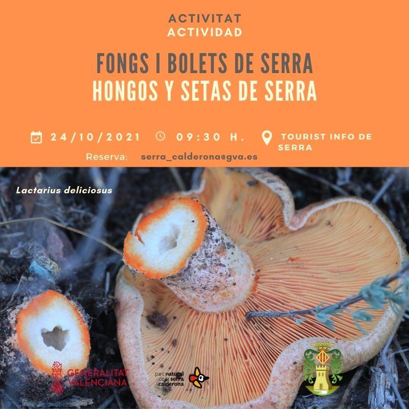 You are currently viewing Fongs i bolets de Serra