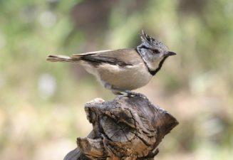 Fauna natura Serra