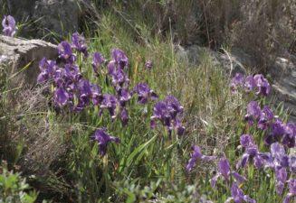 Flora natura Serra